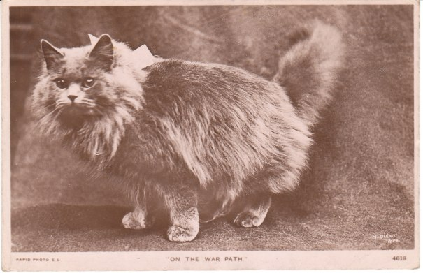 cat on postcard from 1909