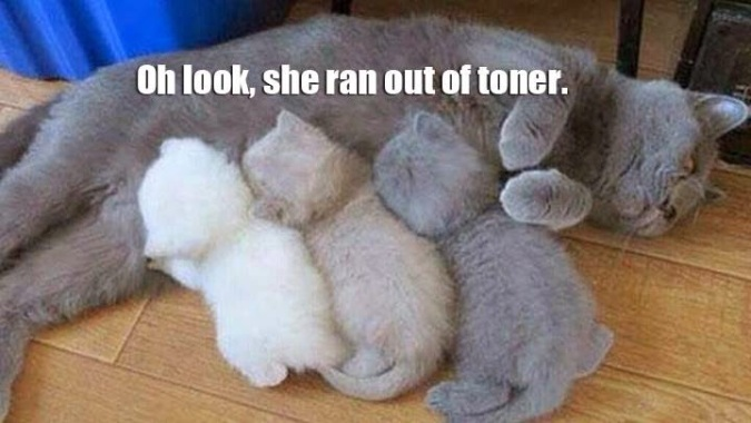 Cat Ran Out of Toner